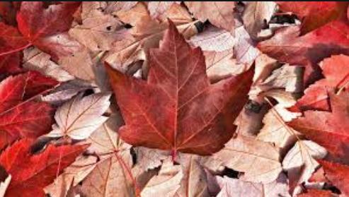 加拿大签证申请审批时长,加拿大各类签证处理时间