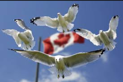 加拿大簽證辦理流程