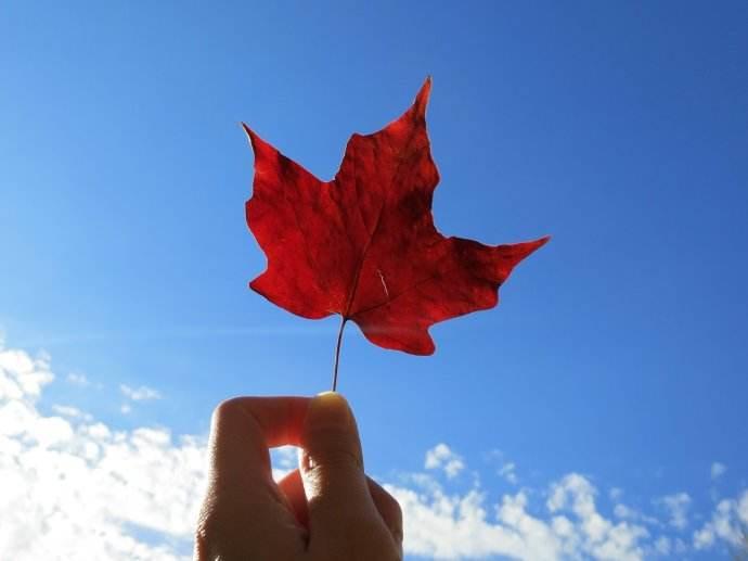 造成加拿大签证难拿到的四点原因